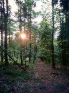 dpcsunshine sunligth forest woodland nature freetoedit