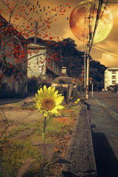 photography urban romaneffect freetoedit