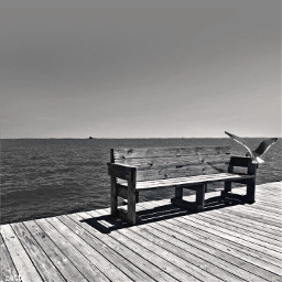 dpcbenches chesapeakebay dock seagull freetoedit