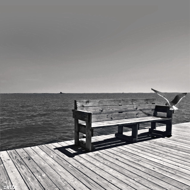 "good morning! #dpcbenches #chesapeakebay #dock #seagull #freetoedit #myoriginalphoto thank you @pa for the feature in ""most liked"""