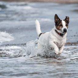 dog cooper supercooper petsandanimals water