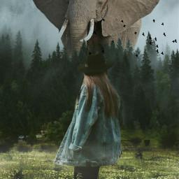 dramaeffect elephant surreal girl forest freetoedit