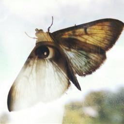 moth wings closeup face blending wapdoubleexposures