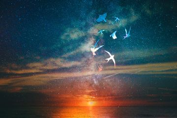 freetoedit sunset galaxy stars birds