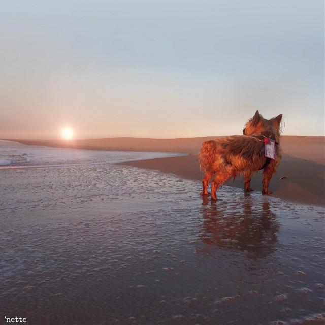 #dpcdog #friendsdog #assateagueisland #sunrise #freetoedit #myoriginalphoto