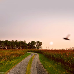 freetoedit thegoldenhour countryroad roadtowhere dragonfly
