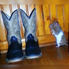 freetoedit boots mypet chillingaround justso