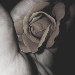 freetoedit rose darkaesthetic