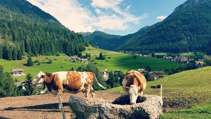 freetoedit photography mountain travel cows