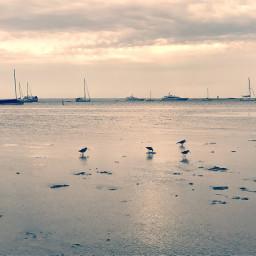 sunrise beach reflection freetoedit