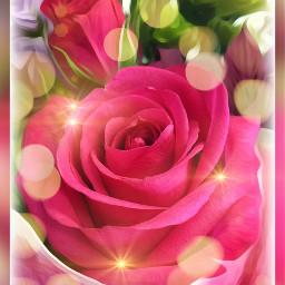 rose bouquet flowerbouquet beautiful flowers