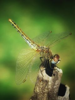 macro nature buglife dragonfly