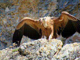 photography vulture nature travel wildlife freetoedit
