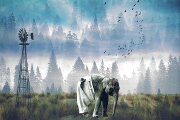 forest trees elephant alone freetoedit