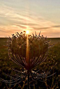 sunrise sunshine sunbeam nature naturephotography