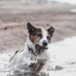 splash dog water fun sea