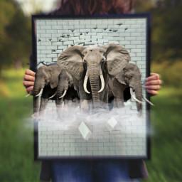 freetoedit bird elephants clouds hole