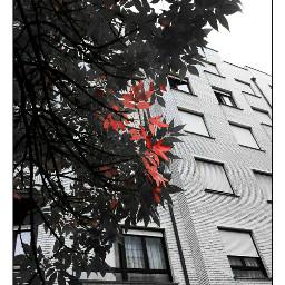tree city building architexture blackandwhite