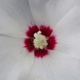 freetoedit center flower flowerpower petalsandblooms