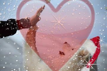 freetoedit dog love owner snow