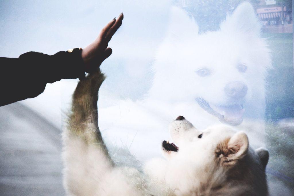 #freetoedit #remix #edit #myart #myedit #madewithpicsart #interesting #art #doubleexposure #dog #cute