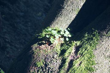 freetoedit tree