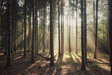 freetoedit creatorgrams wonderful_places rsa_nature wonderful_holland