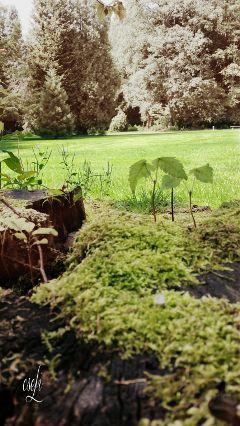 @csefi nature naturephotography naturelover green