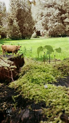 freetoedit nature green @csefi