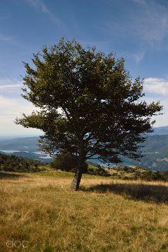 freetoedit photography tree trees nature