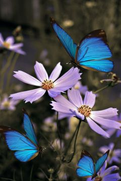 photography butterfly lovelyflower cosmosflower freetoedit