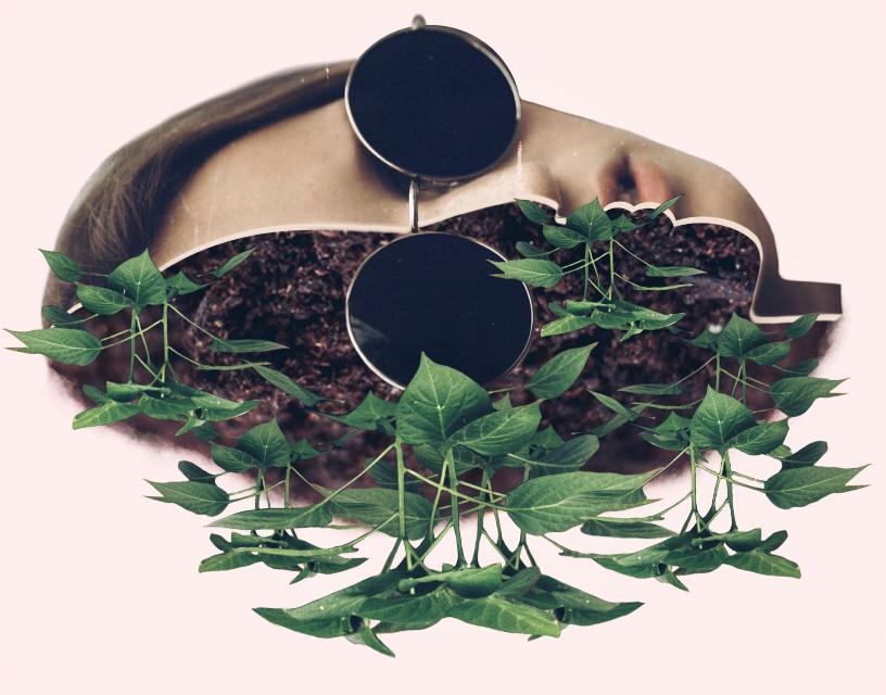 Plants by @freetoedit