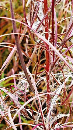 freetoedit weeds