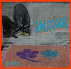 raccoon byliriosbellos fromcostarica withpicsart purelife