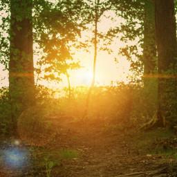 nature sun sunset forest woods freetoedit