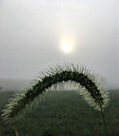 sunrise nature naturephotography fog