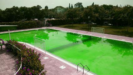 pool green