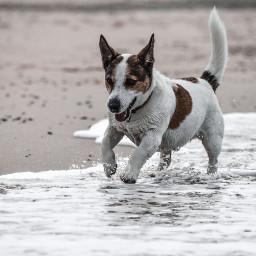 freetoedit dog petsandanimals cute beach
