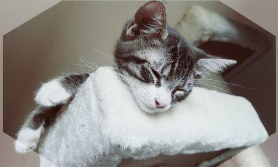 freetoedit mypet cat love animals