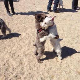 animals freetoedit interesting beach dog