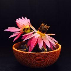 freetoedit photography flower