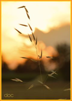 freetoedit photography sunset beautiful nature