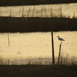 nature bird freetoedit