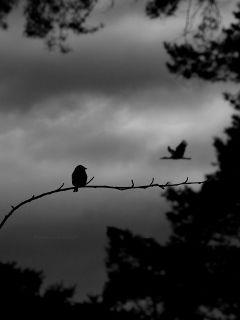 deeliriouss emotions nature photography blackandwhite