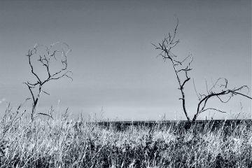 photography blackandwhite tree sky nature freetoedit