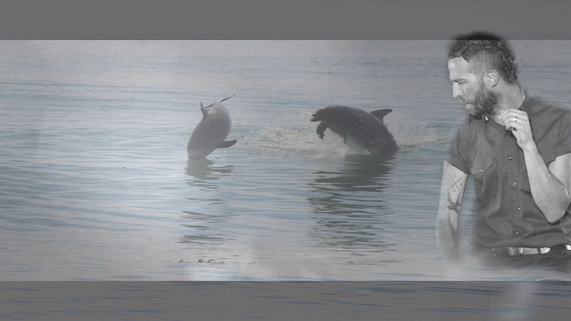 #nature #dolphins