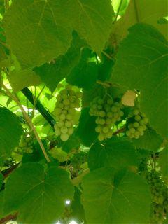 green wine picoftheday helloseptember