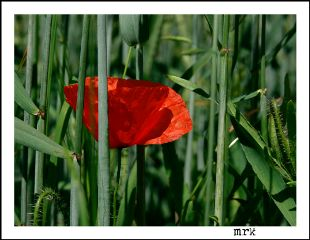 freetoedit flower green red nature
