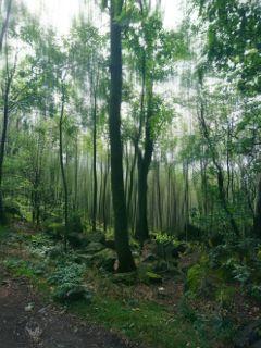 forest woodland nature photography landscape freetoedit