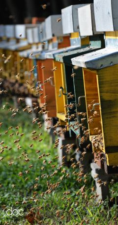 freetoedit photography hdr bees colorful